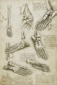 dibujos anatomía del pie de leonardo da vinci