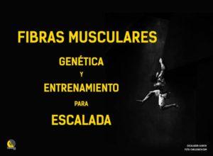 fibras musculares: entrenamiento y genética para escalar