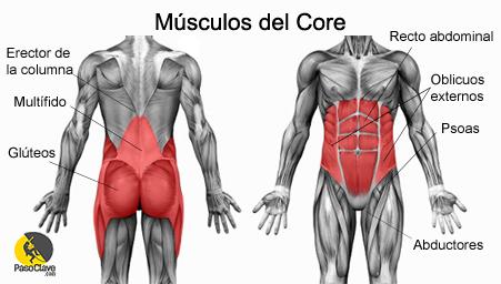 dibujo de los musculos que componen el core y abdominales