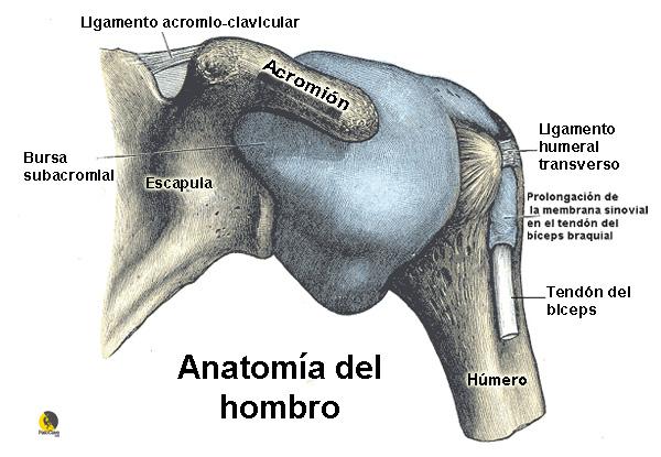 dibujo de la bursitis subacromial. lesión típica entre escaladores