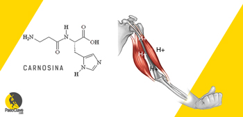 la carnosina retrasa la fatiga escalando a nivel intracelular