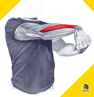 estiramientos para epicondilitis y codo de tenista en la rehabilitación de lesiones en el codo de escaladores