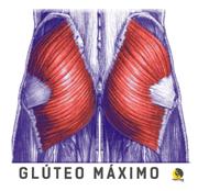 ilustración del músculo del glúteo máximo o mayor en un escalador