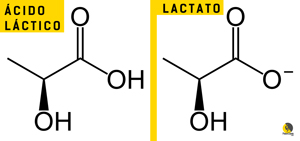 diferencia entre el ácido láctico y el lactato
