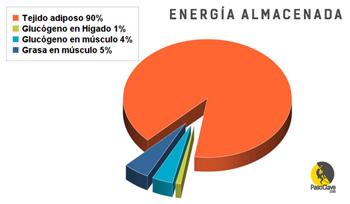 gráfico de la energía almacenada en un escalador