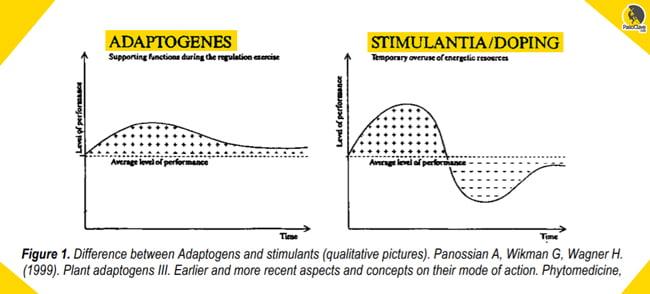 efecto de los adaptógenos contra el estrés