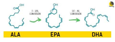 suplementos de EPA y DHA para escalada y boulder