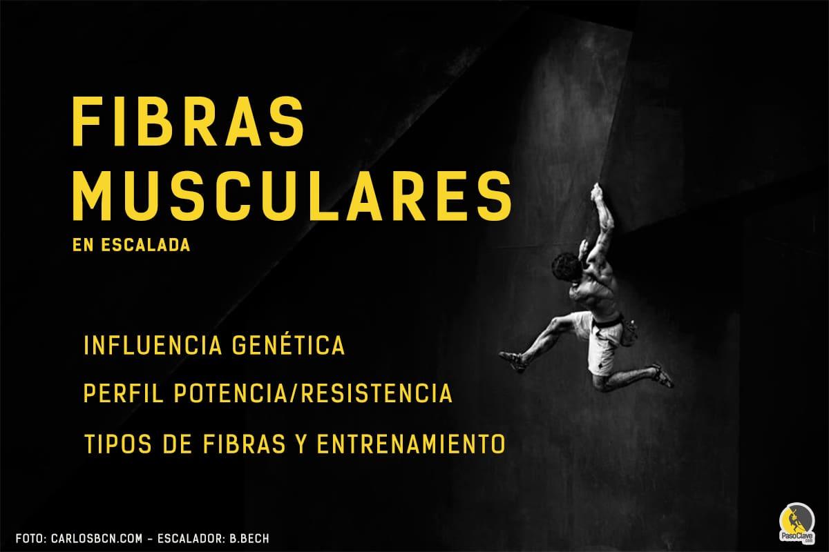 Fibras musculares y potencial genético en la escalada